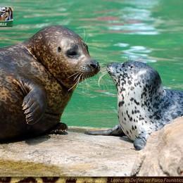 Nuovi nati al Parco Le Cornelle Una foca, un sitatunga e un  bue