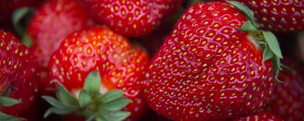 Pesticidi: contenuti nel 45% del cibo Fragole e lattuga più a rischio