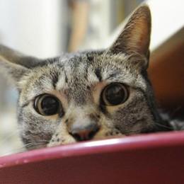 Trescore, processo al «killer dei gatti» I testimoni: sevizie e foto su WhatsApp