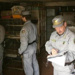 Pappagalli e tartarughe stipati in garage Gli sequestrano 50 animali,  denunciato