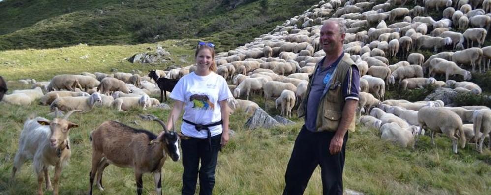 Volete provare a fare i pastori? Sulle Orobie torna «Pasturs»