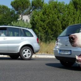 Cane attaccato alla portiera e trascinato Parla l'autista: «Solo un equivoco»