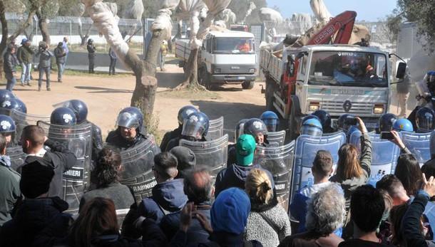 Tap: ripresi lavori espianto degli ulivi