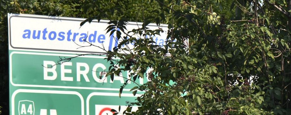 Giungla nell'asfalto a Bergamo  - Foto Rondò e svincoli assediati dal verde