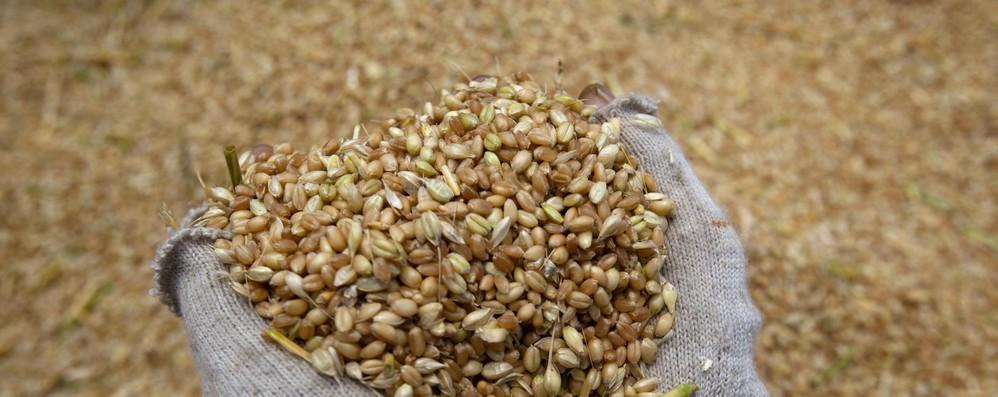 Agroalimentare, in luglio export mensile Ue +2%