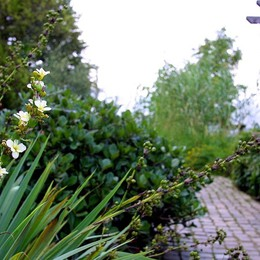 Autunno all'Orto botanico: ancora pochi giorni per visitarlo prima della chiusura invernale