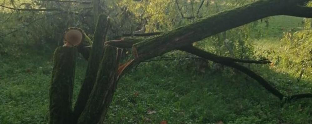 Caccia ai vandali degli alberi, telecamere al vaglio: «Sarete individuati, costituitevi»